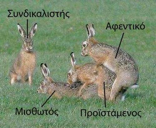 lagoi_afentika2